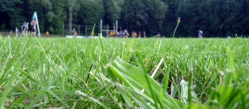 Het veld ligt er mooi bij!